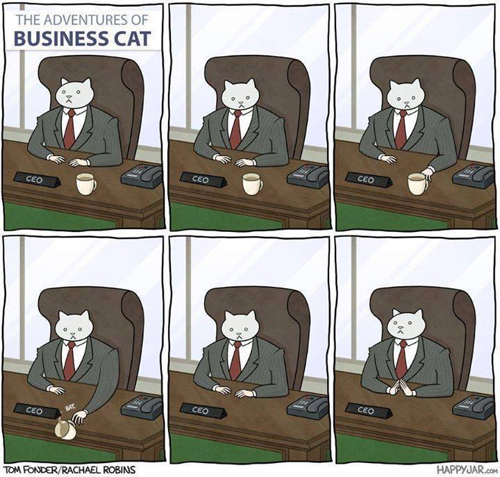 adventures of business cat
