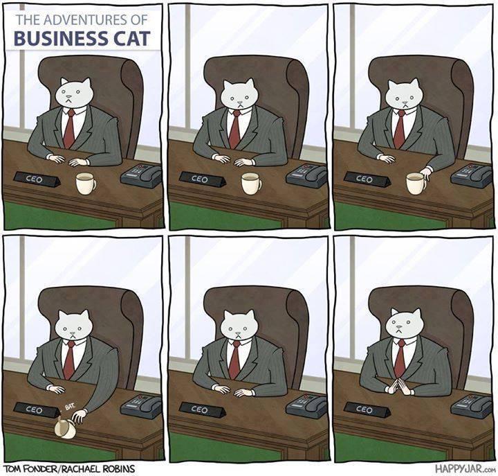 adventures of business cat
